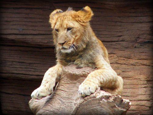 Zoo 23new