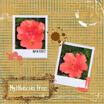 Hibiscus_tree_frame