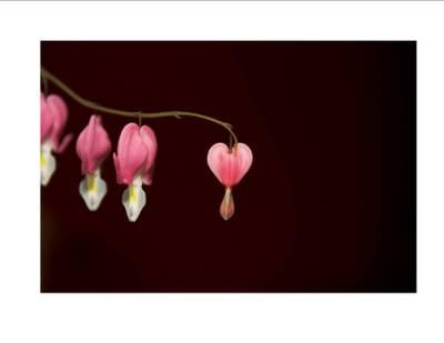 Pink_flower_2
